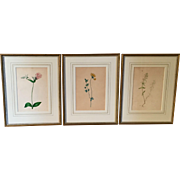 Group 3 Antique 19th century Botanical Watercolor Paintings Flower Studies Framed in French Mats