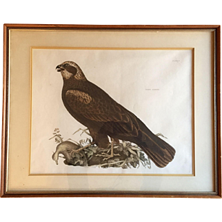 Large Antique Early 19th century Hand Colored Folio Ornithological Lithograph of a Marsh Harrier by Prideaux John Selby (1788 - 1867) Bird Print