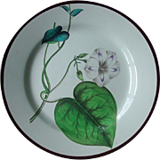 18th c. Antique Swansea Creamware Pearlware Botanical Plate 1800