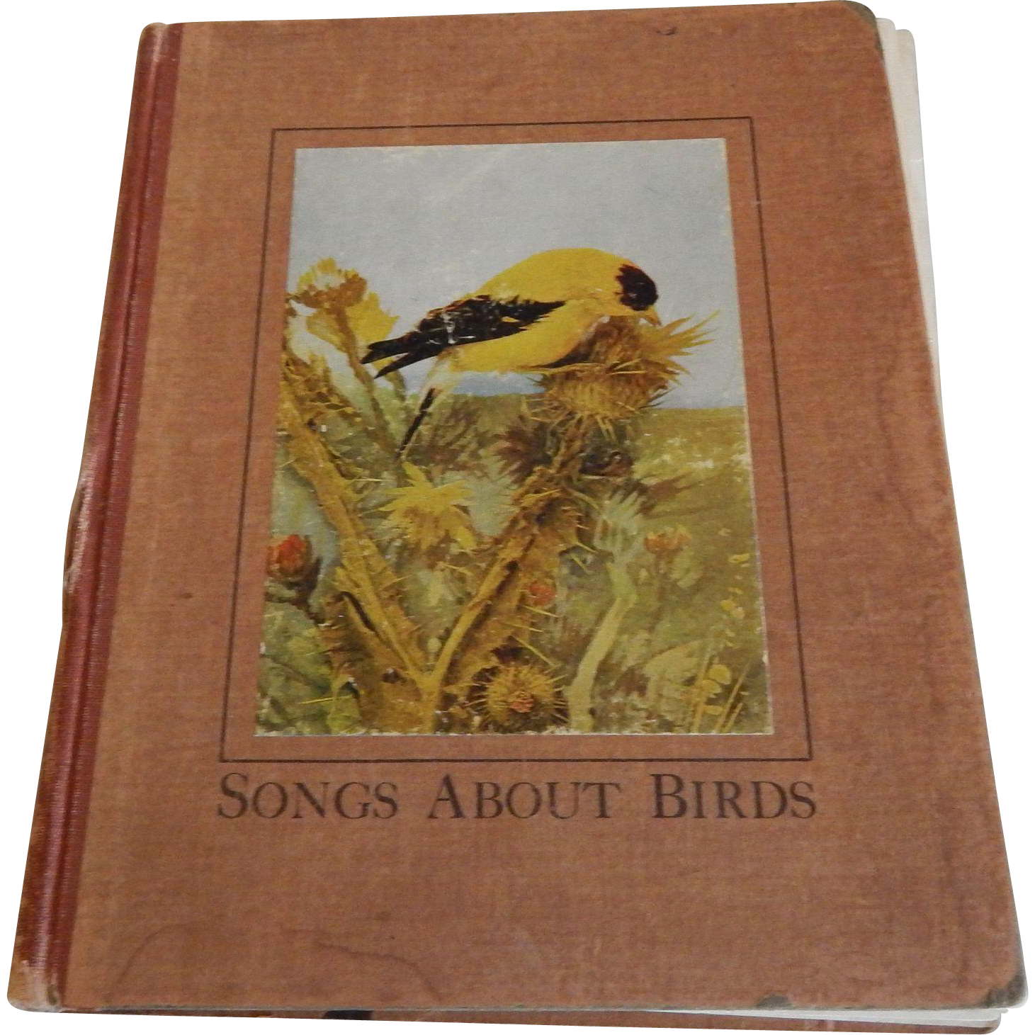 Songs About Birds