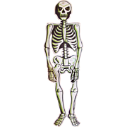 "Vintage 24"" Jointed Hanging Skeleton with Glow in the Dark Accents"