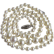 Vintage 14kt AA Cultured Akoya Pearl Graduated to 7.5mm St Necklace Certified Appraisal $1625