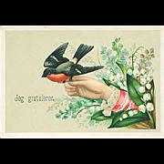 """Redbreast""  (1920')"