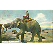 Antique Elephant Working Timber Rangoon Postcard Burma Myanmar 1910