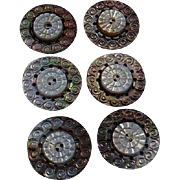 Six Victorian Carved Mother of Pearl Tinted Buttons