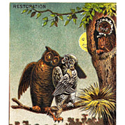 c1885  Owls and Frogs Victorian Trade Card - Saint Louis Windsor Folding Bed Advertising -- 20% DISCOUNT with Purchase of 2 or More Items!!