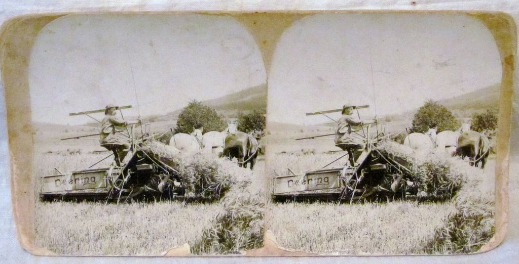 c1900 Deering Harvester Company Ground Driven Reaper - Horse Farming Real Photo Stereo View - Farmer and Three Horse Team