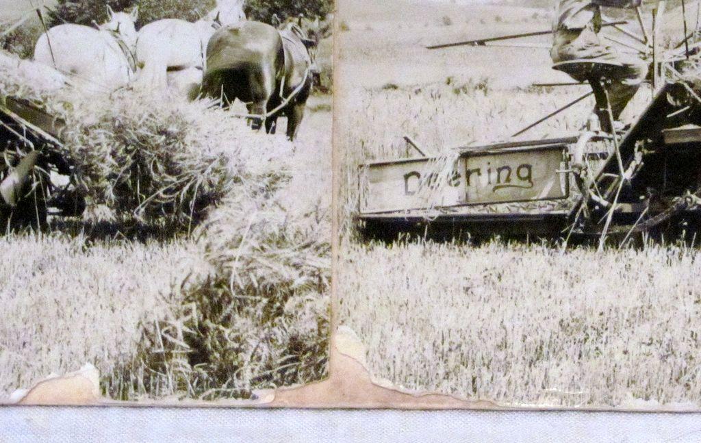 Deering Harvester Company : C deering harvester company ground driven reaper