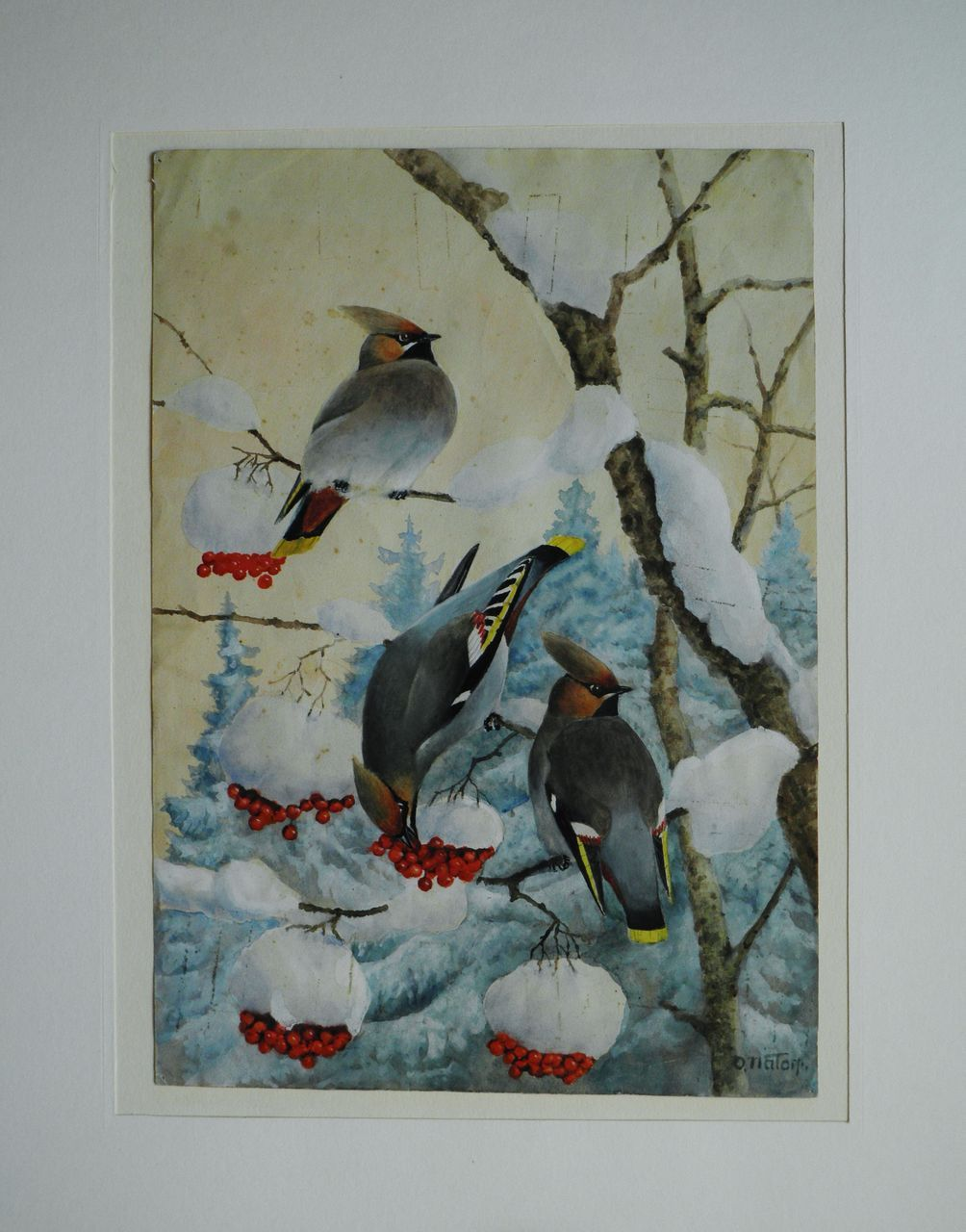 Watercolour with Cardinal Birds in Winter