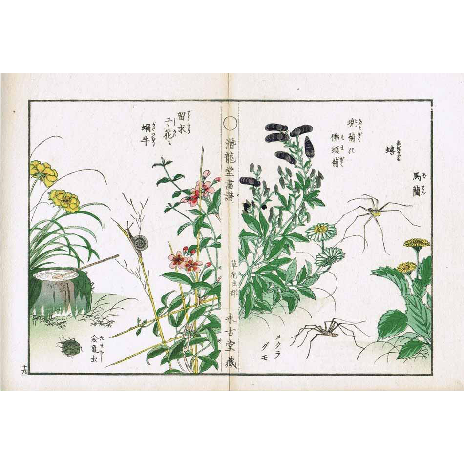 Antique Japanese Woodblock Print with Plants