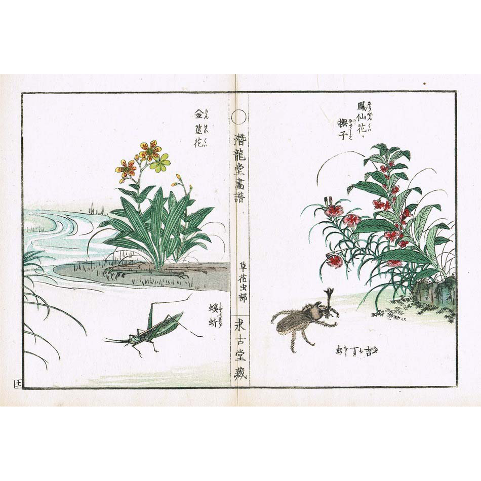 Antique Japanese Woodblock Print with Plants and Insects