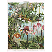 1898: Orchids. Decorative Chromo Lithograph
