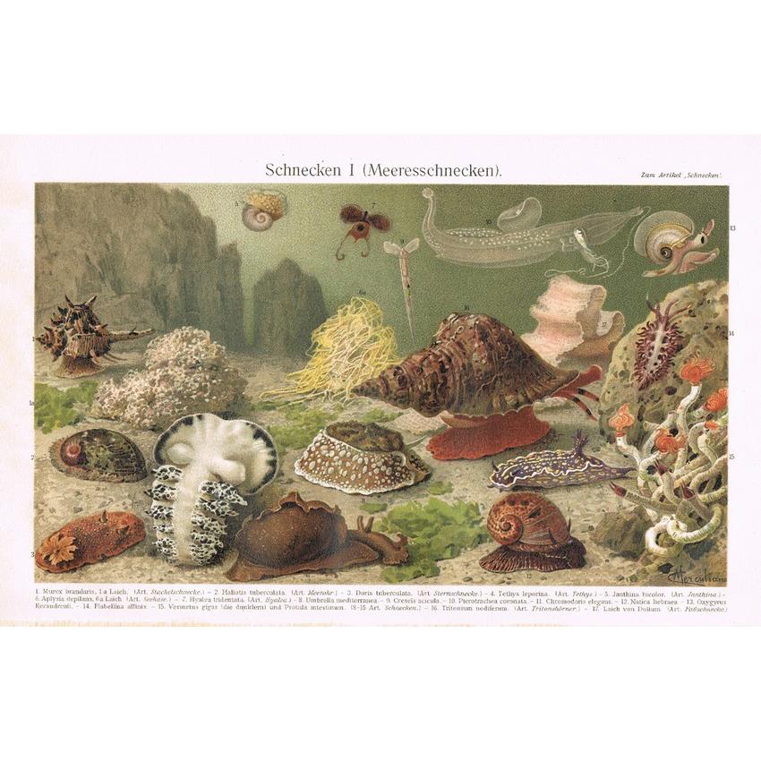 Snails: Antique Chromolithograph