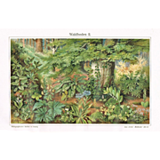 Forest Floor. Two Chromo Lithographs from 1900