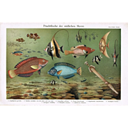 Two Chromo lithographs with Fishes, 1900