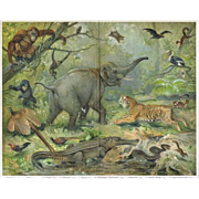 Oriental Fauna: Antique Lithograph. Very decorative.