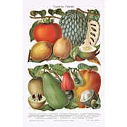 Tropical Fruits: Very decorative Chromo Lithograph from 1900