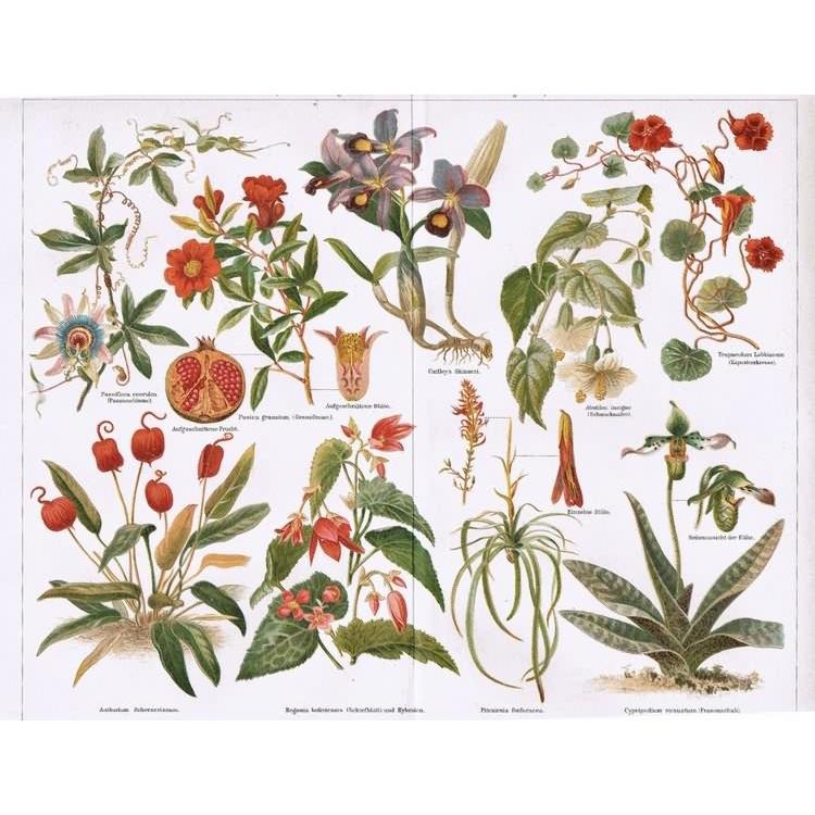 Indoor Plants: Set of 2 decorative, antique Lithographs