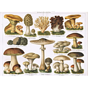 Mushrooms: 2 Antique Chromo Lithographs from 1898