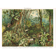Tropic Woods: Chromo Lithograph 1898