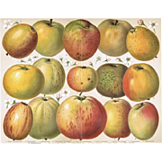Apples: Very decorative, antique Chromo Lithograph. 1900
