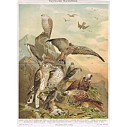 1898: German Raptors. Antique Chromolithograph from 1898