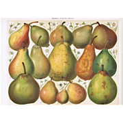 Pears. Decorative Chromo lithograph of Pears from 1898