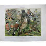 Foreign Cage Birds. 2 Decorative Chromo Lithographs from 1898