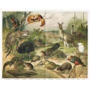 Australian Fauna: Outstanding Antique Lithograph. 17 Animals