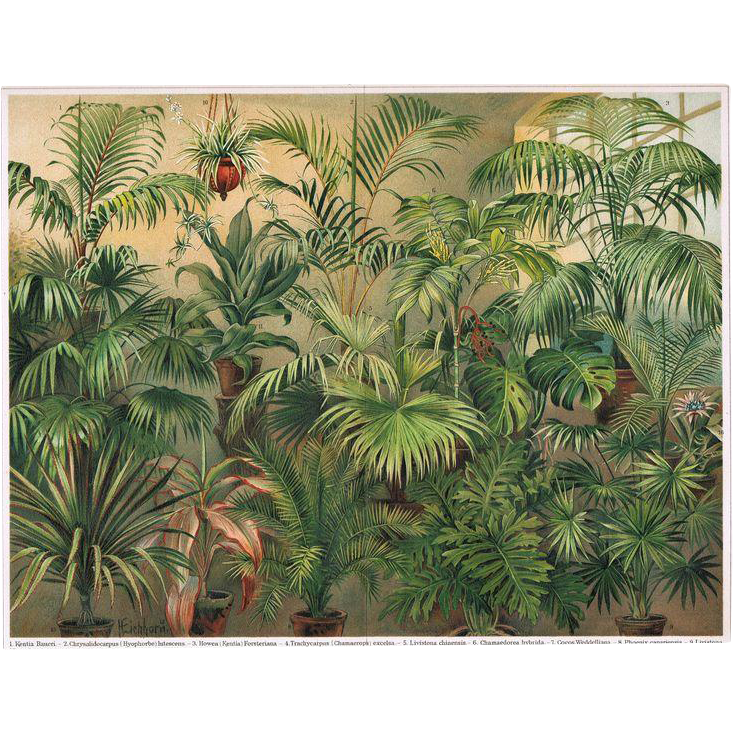 Two Antique  Lithographs with Foliage Plants 1900