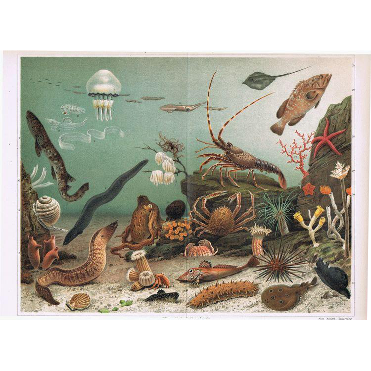 Aquarium for Seawater. Chromolithograph from 1902