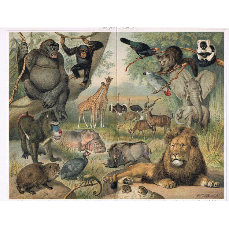 Ethiopian Fauna. Chromolithograph from 1902