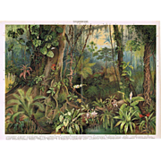 Tropic Woods. Antique Lithograph from 1900