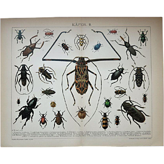 Beetles Antique Two Lithographs from 1898