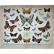 Butterflies Two Antique Chromo Lithographs