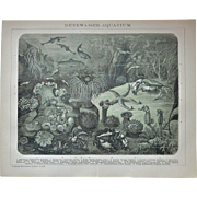 Sea Water Aquarium. Decorative Chromo Lithograph from 1898
