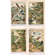 European Birds.  Set of Four Decorative Chromo Lithographs from 1898