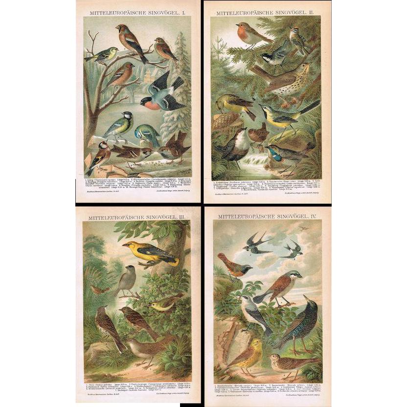 European Birds.  Set of Four Decorative Chromo Lithographs from 1898