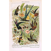 Honeysuckers Antique Chromo Lithograph from 1898