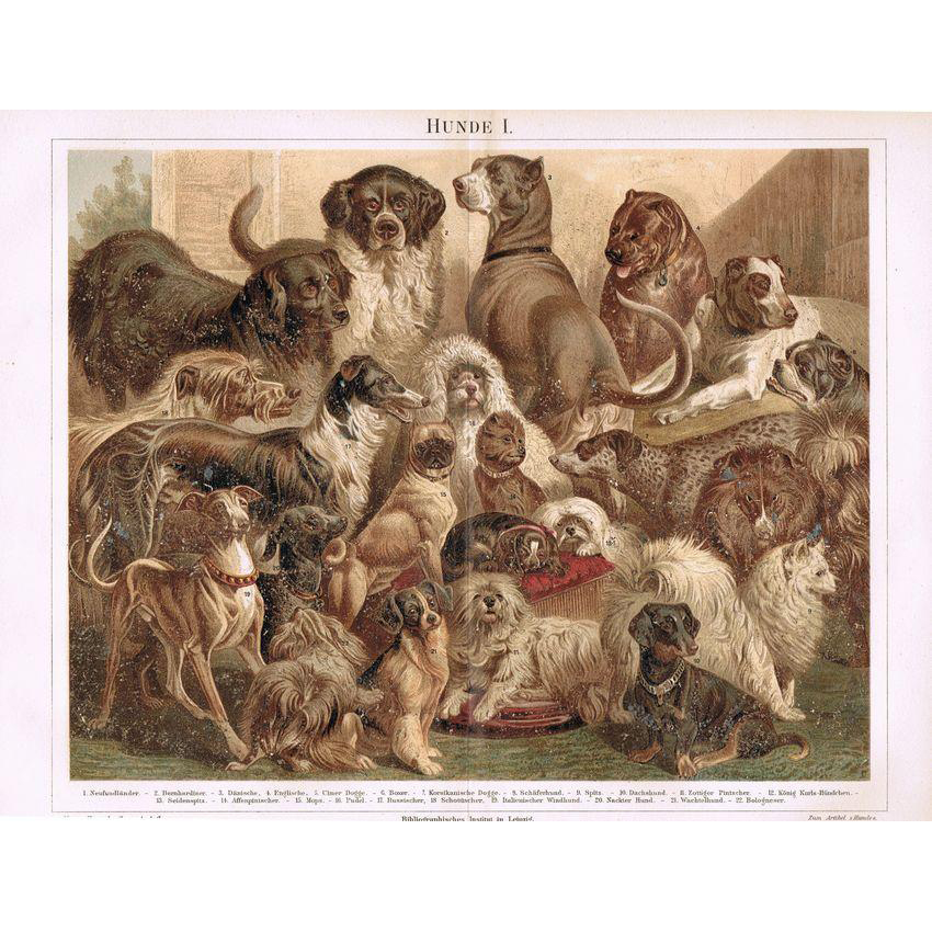 Dogs Decorative Lithograph from 1898