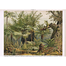Fern Decorative Chromo Lithograph from 1900
