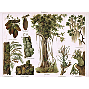 Epiphyte: Most attractive Antique Lithograph. 7 Samples
