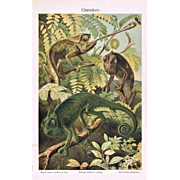 Chameleons Antique Chromo Lithograph from 1900