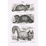 Cats Antique Etching from 1900