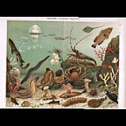 Aquarium Two Antique Chromo Lithographs