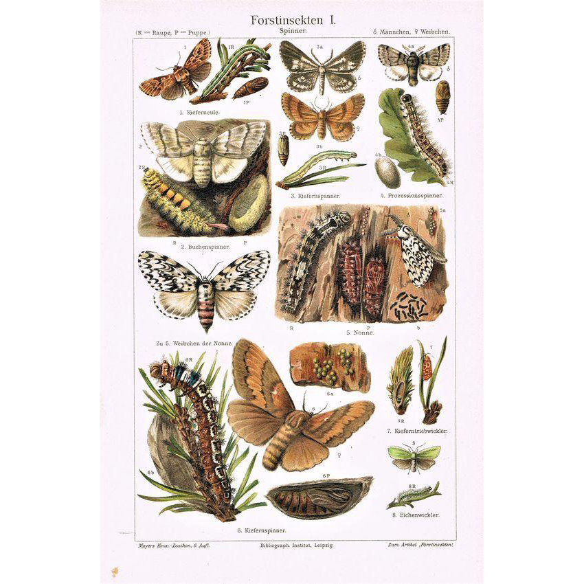 Forest Insects Two Chromo Lithographs from 1900