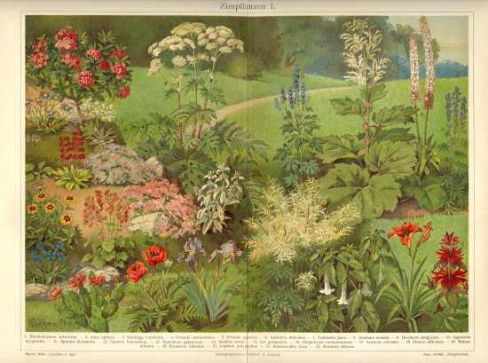Ornamental Plants: 2 antique Chromo Lithographs. 1902