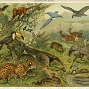 Neotropic Fauna: Antique Chromo Lithograph. 1898