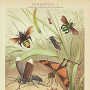 1898: Decorative Chromo lithograph of Insects.
