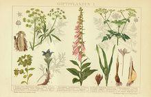Poisonous Plants: 2 Antique Chromo Lithographs